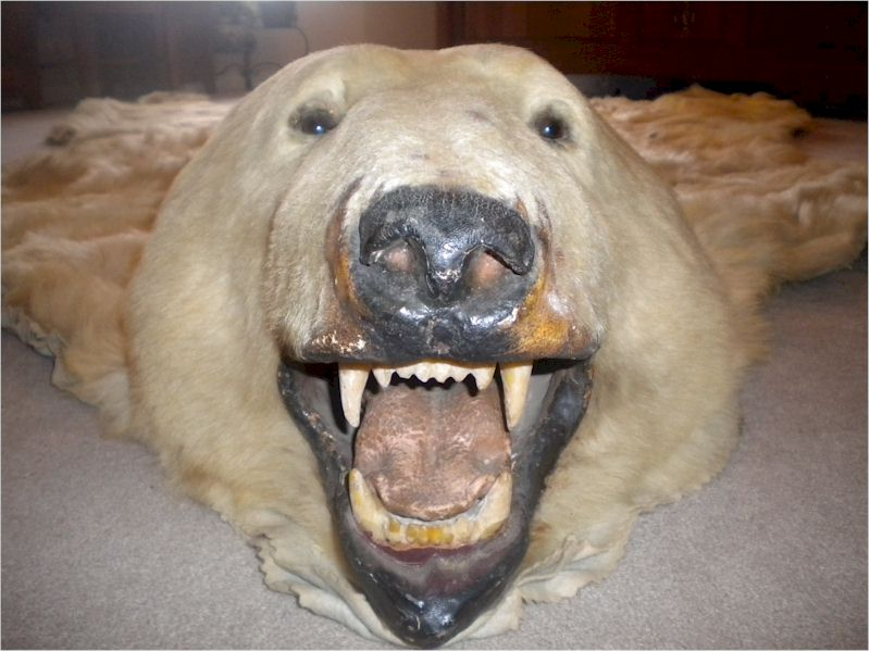 "8'9"" Vintage Polar Bear Rug ""MAKE OFFER"