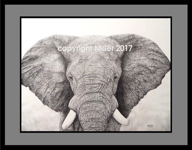 African Elephant 4 X 6 200.jpg