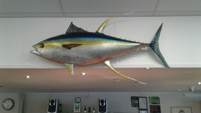yellowfin mounted (2).jpg