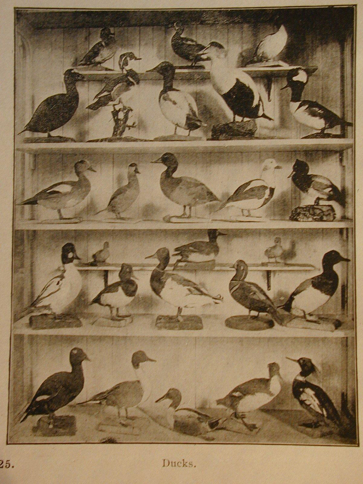 FBW Ducks.JPG