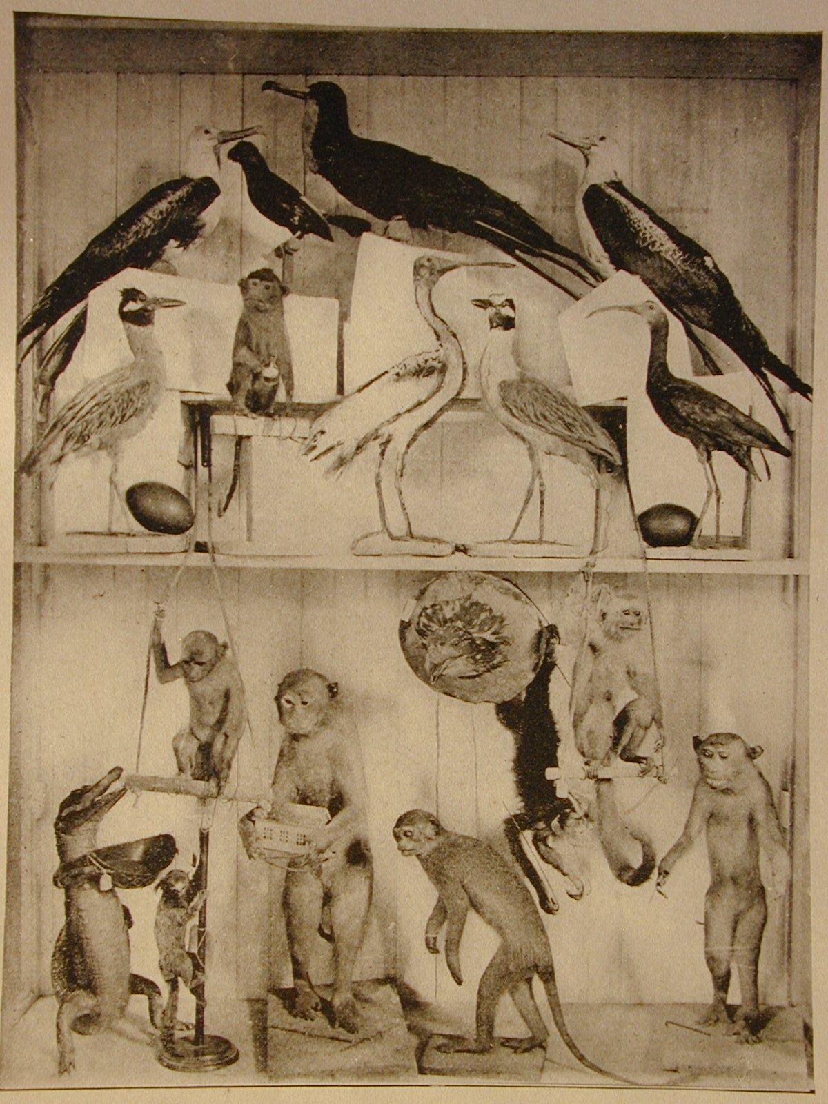 FBW sea birds and primates.JPG