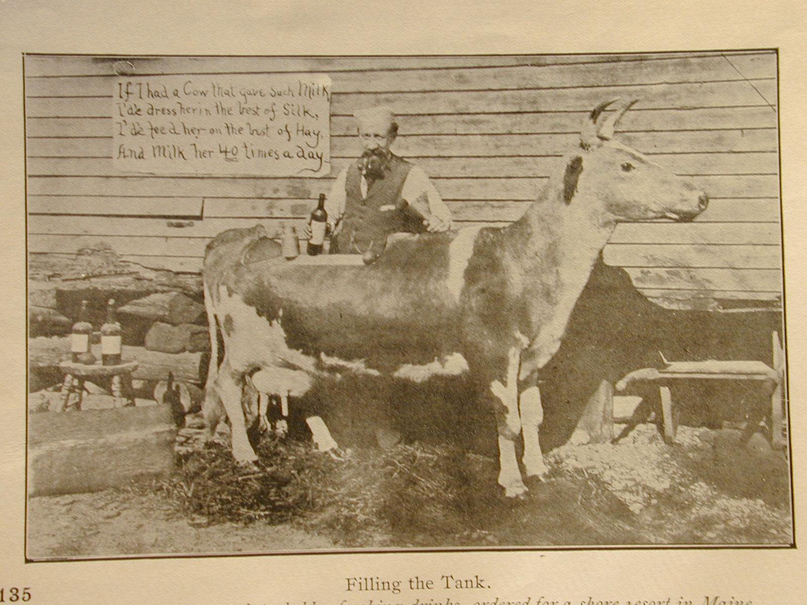 FBW Webster Milk cow.JPG