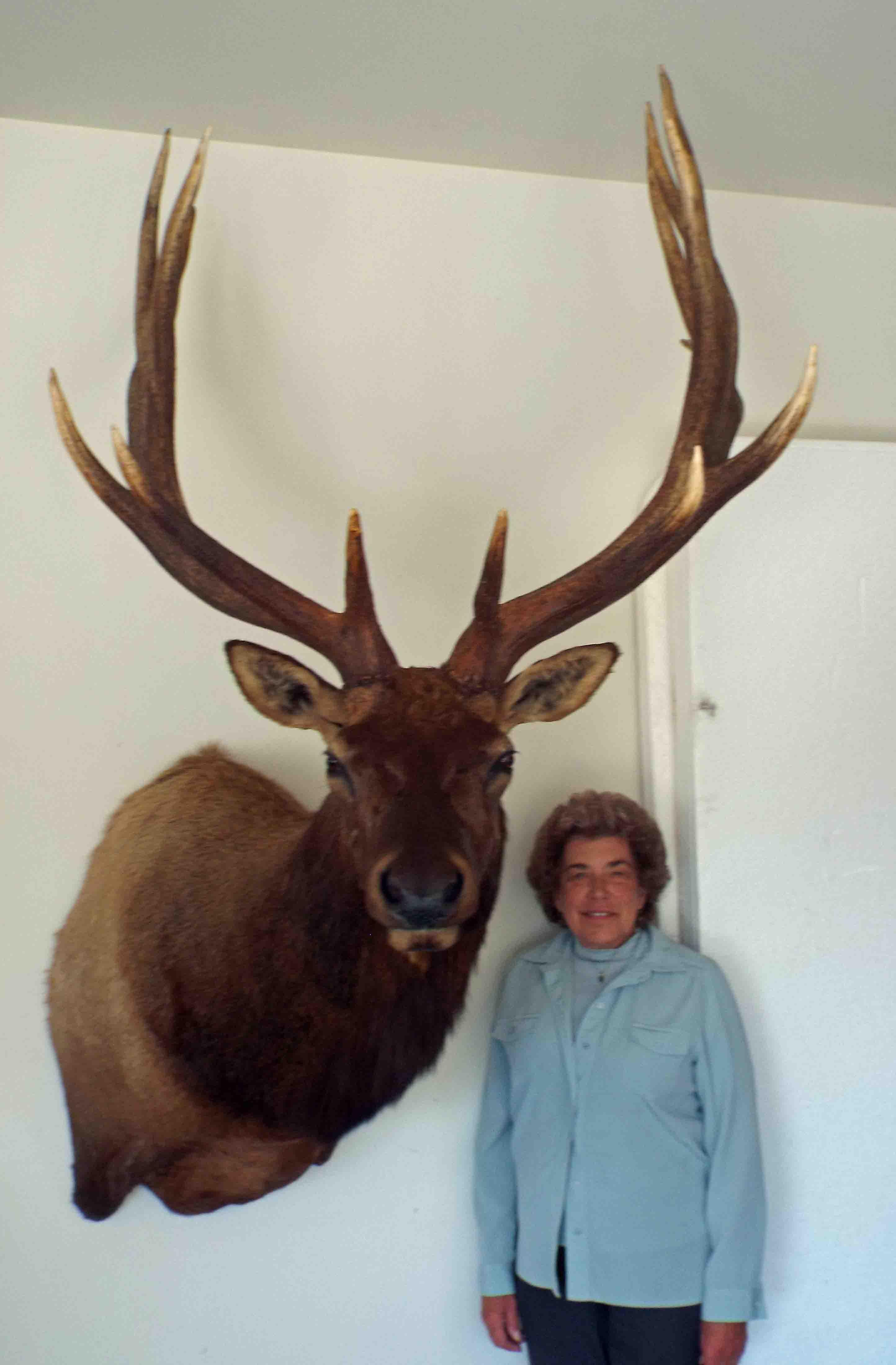 387 inch elk.jpg