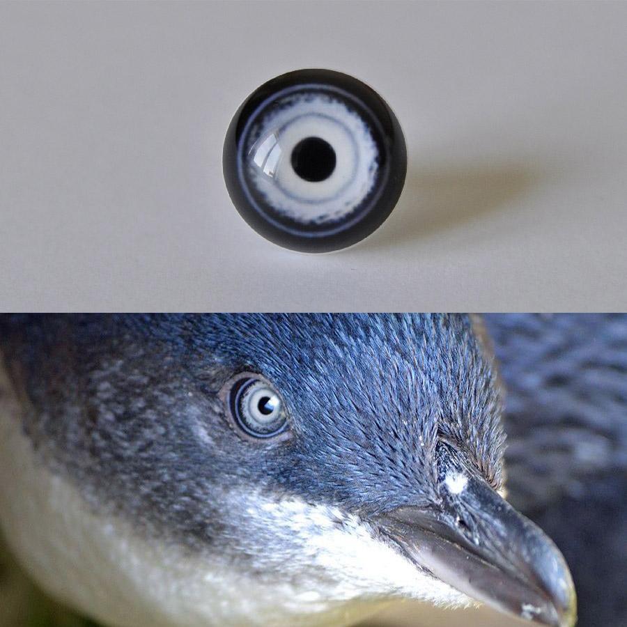Little_penguin_SM.jpg