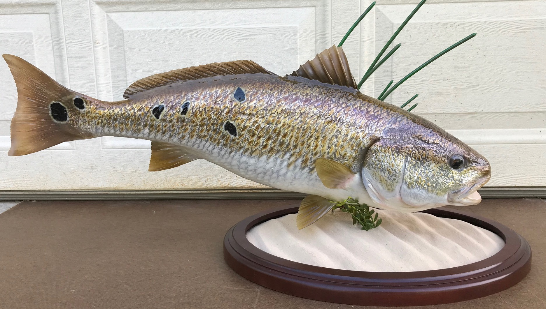 redfish 1.jpg