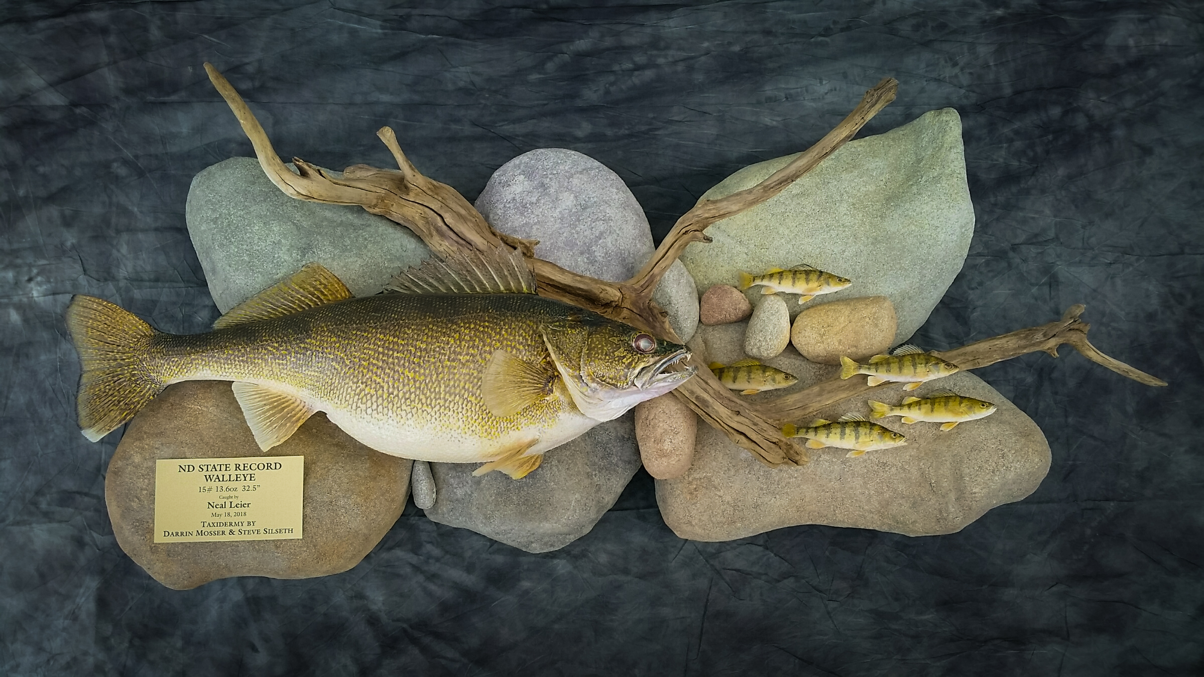 record walleye taxidermy .jpg