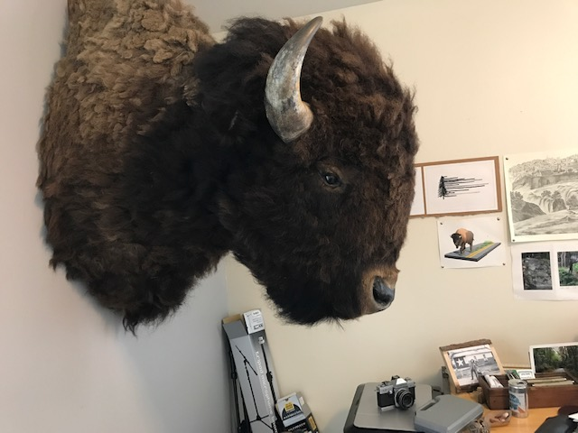 Buffalo_SideView.JPG