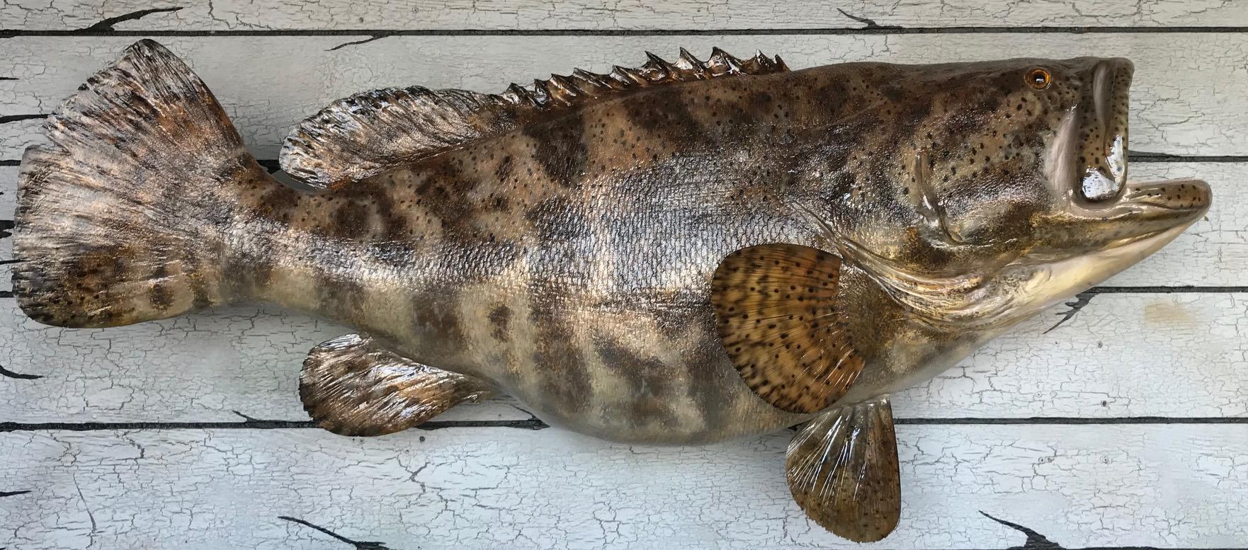 jewfish 1.jpg