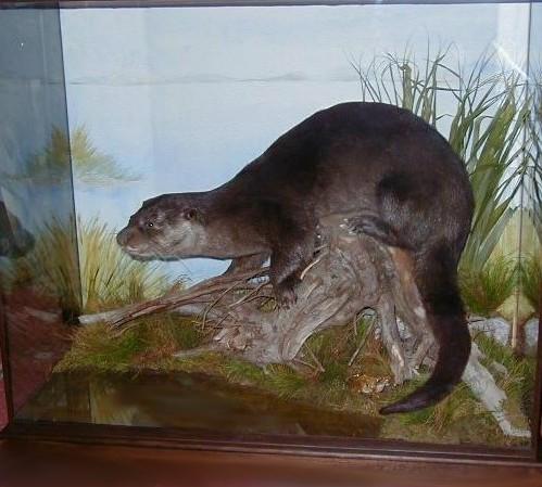 otter mount.jpg