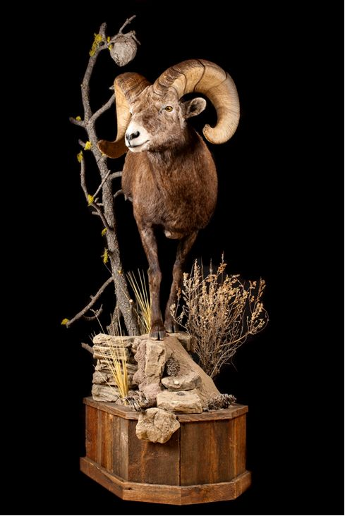 2014_California_Bighorn-sml.jpg