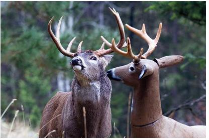deer eye roll.PNG