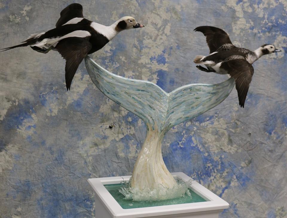Long Tailed Ducks.jpg