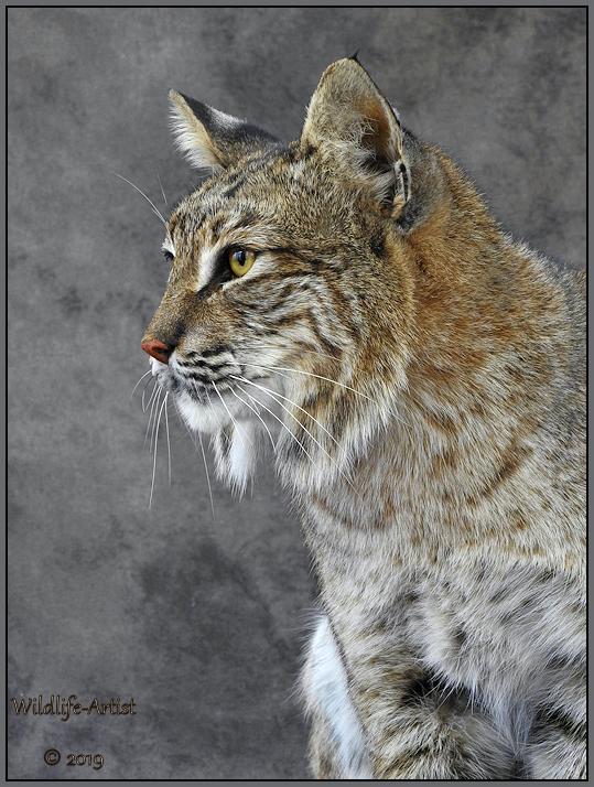 bobcat2966.jpg