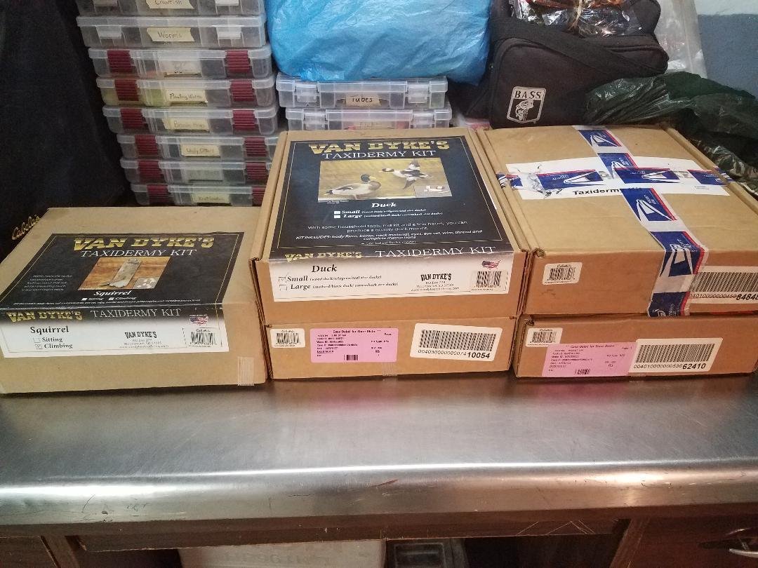 Taxidermy kits.jpg