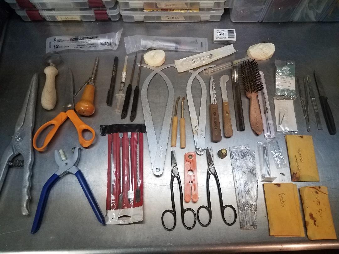 Taxidermy tools.jpg
