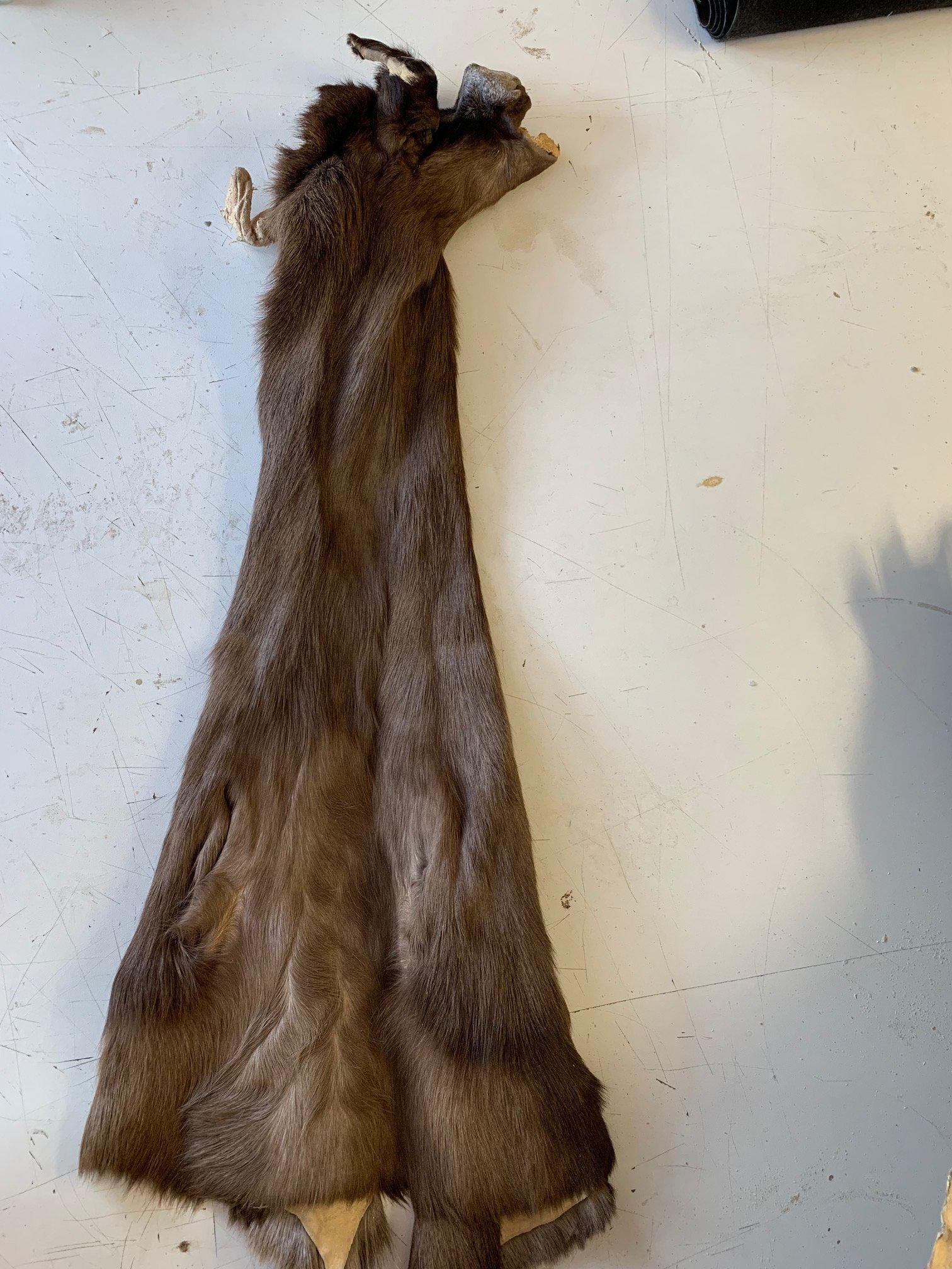 tanned black springbok cape.jpg