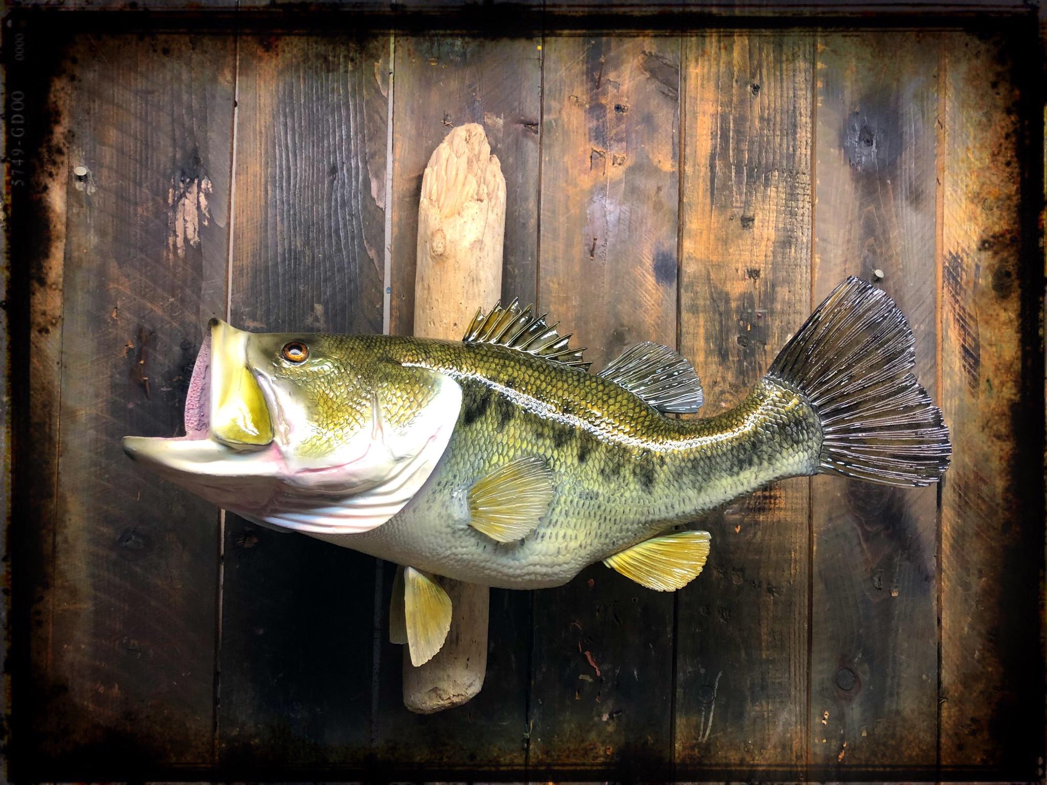 tylers bass.jpg