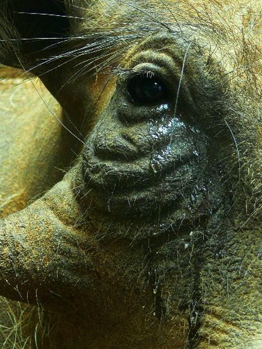 Warthog Eye.jpg