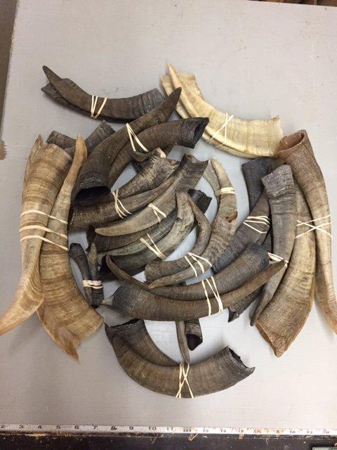 horns 2.JPG