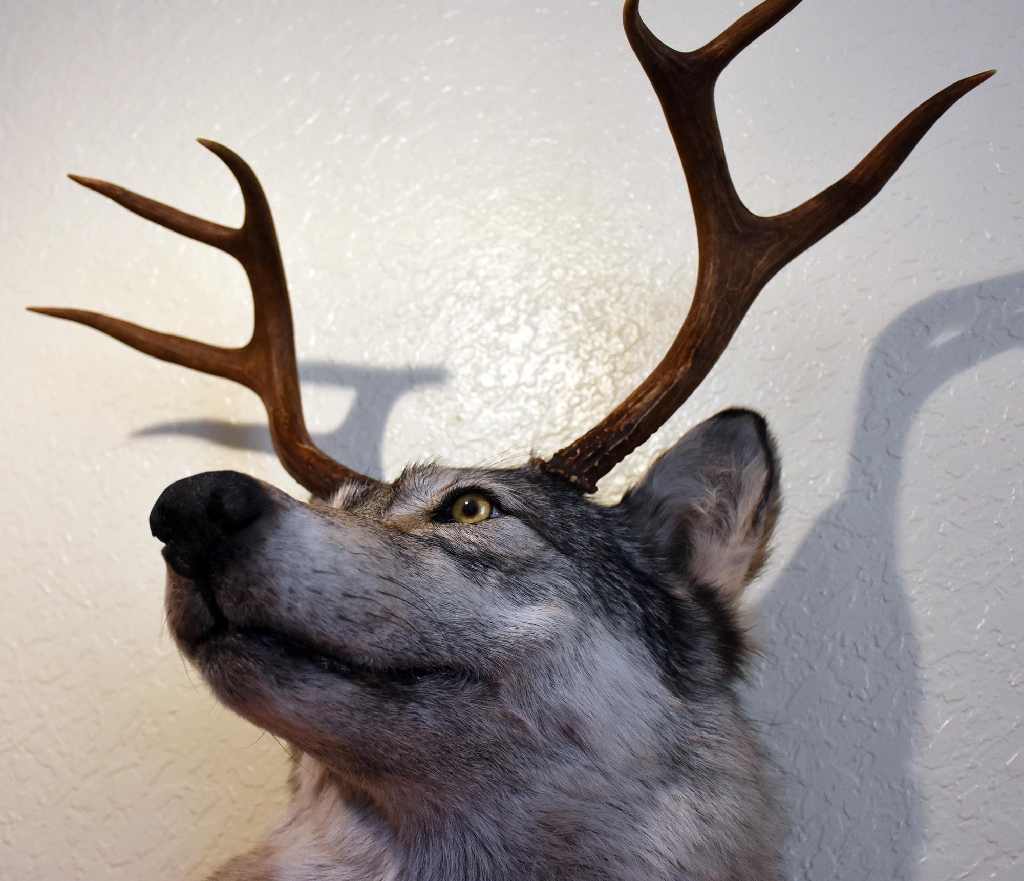 wolfedit1.jpg