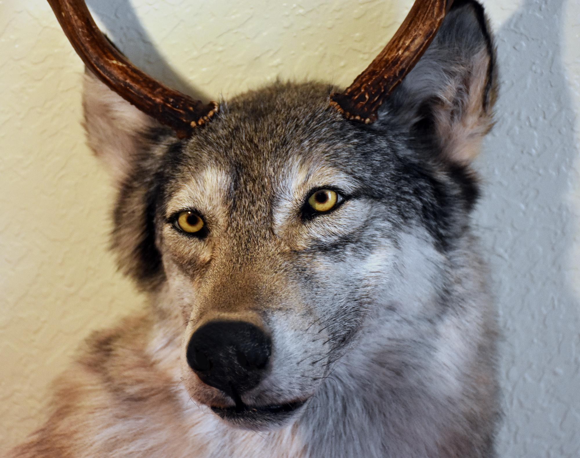 wolfedit3.jpg
