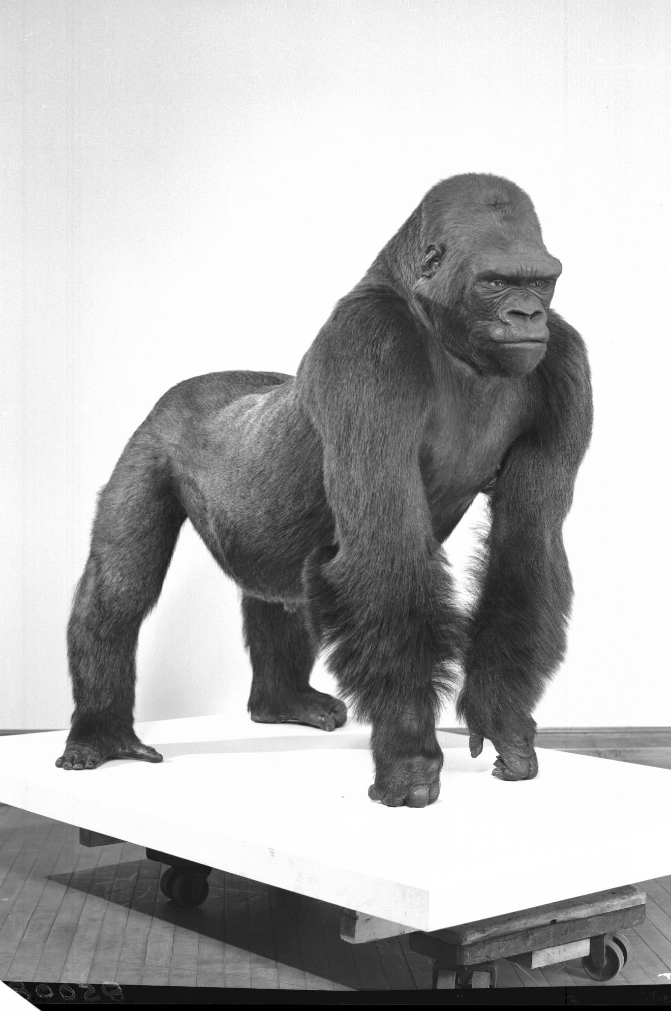 Bushman - 9.jpg