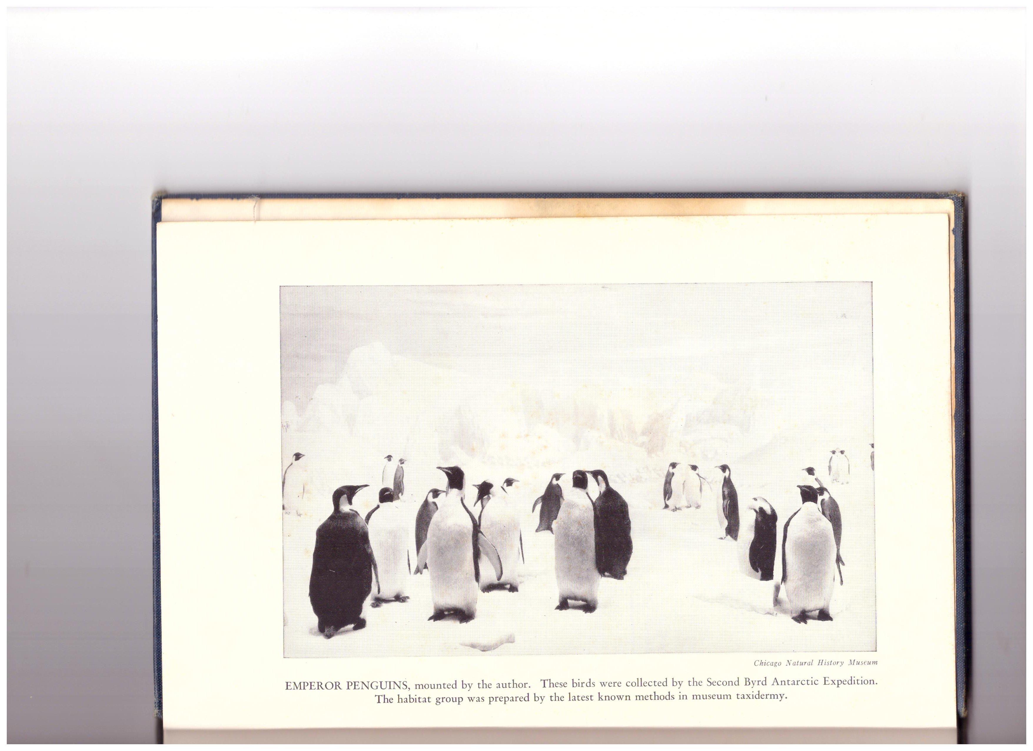 Moyer's penguins.jpg