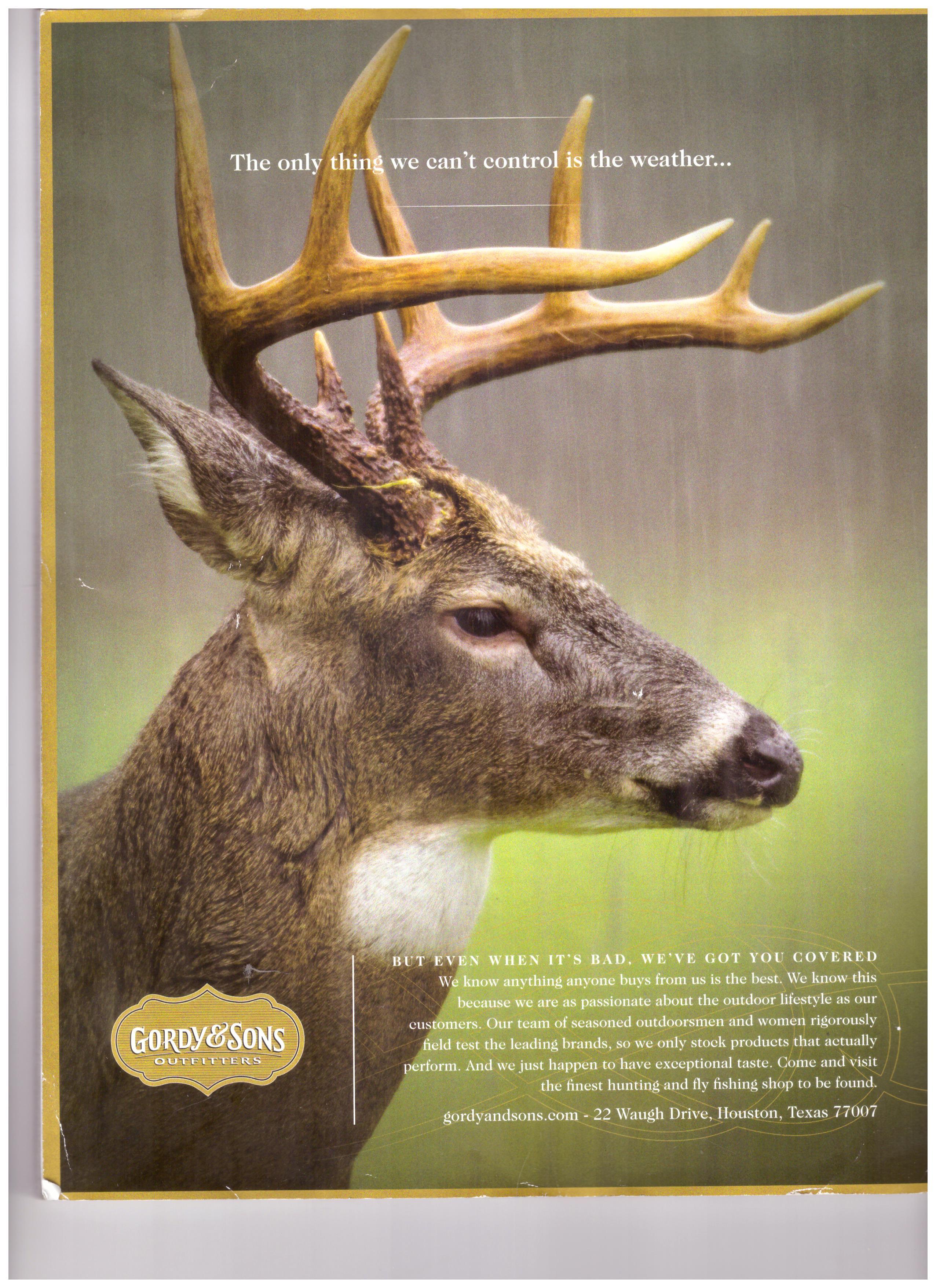 white tailed deer.jpg