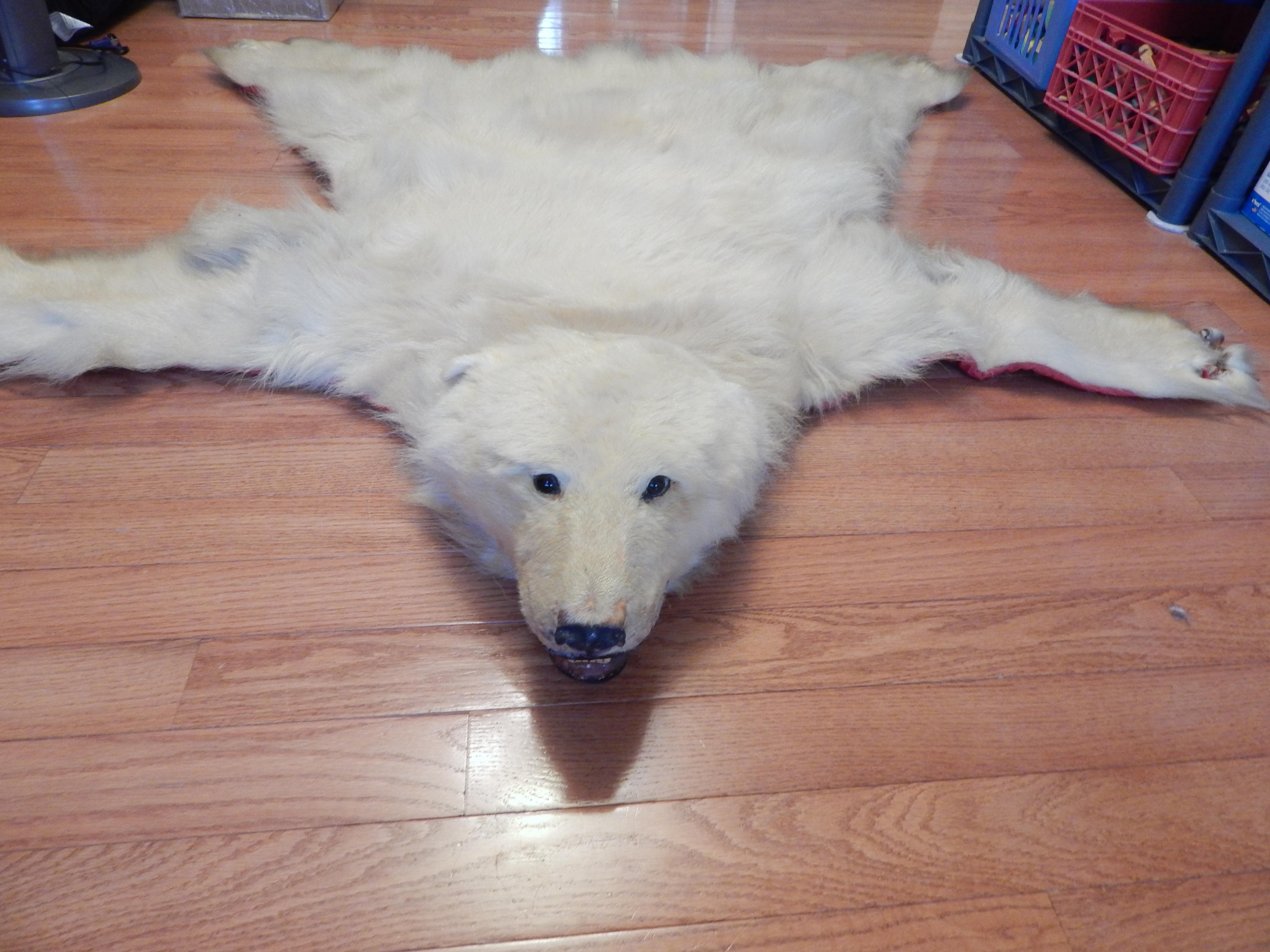 Polar Bear Rug 1965,1966 From Norway