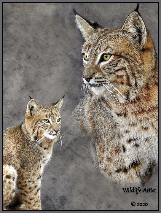 bobcat3054.jpg