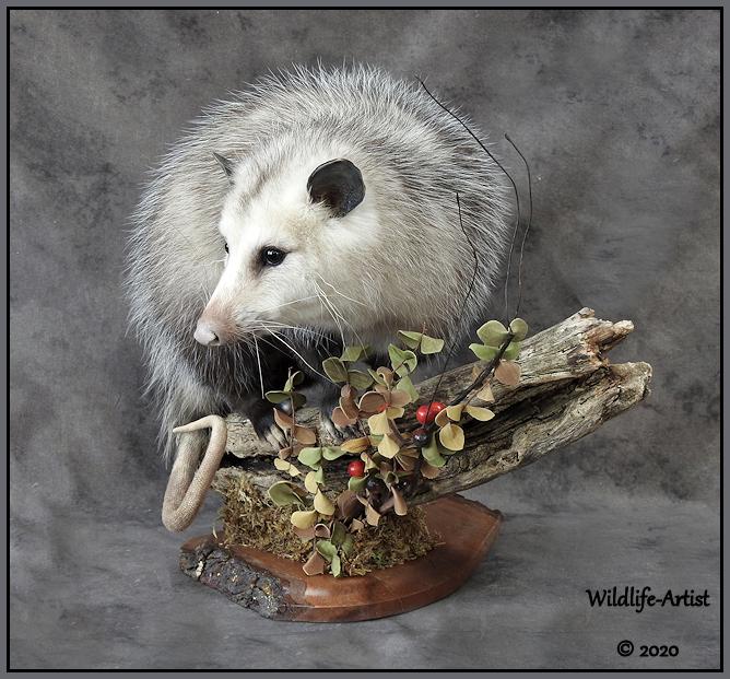 opossum23.jpg