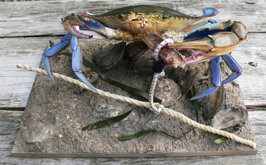 Trot Line Crab 1.jpg