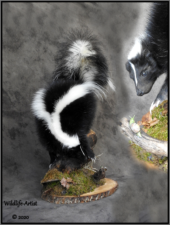 skunk66.jpg