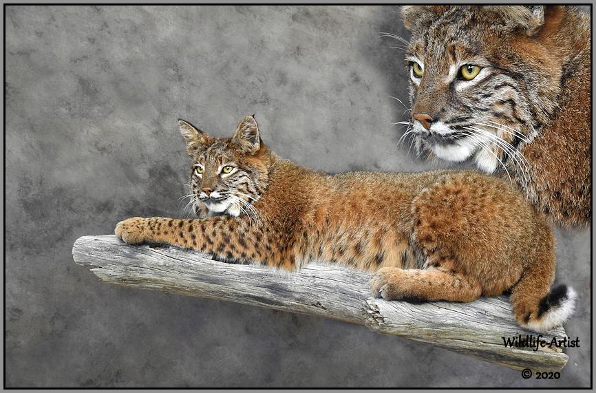 bobcat3075.jpg