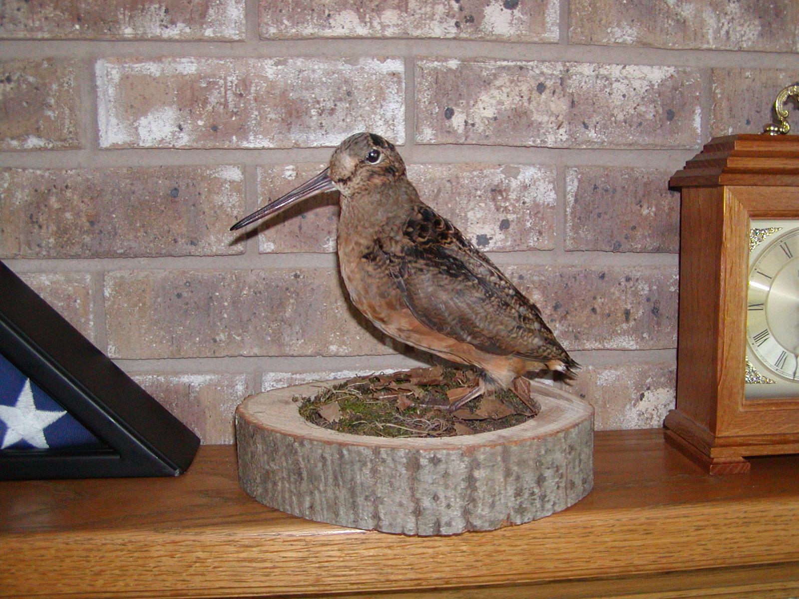 woodcock after.JPG