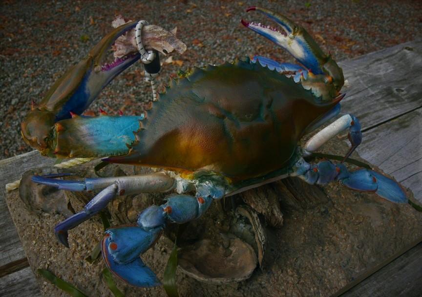 Trot line crab 3 (2).jpg