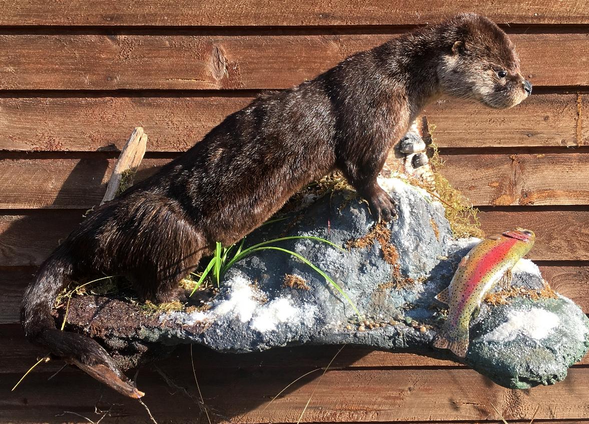 Honer Otter1.jpeg