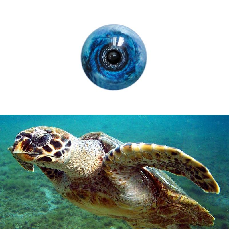 Hawksbill _Turtle_SM.jpg