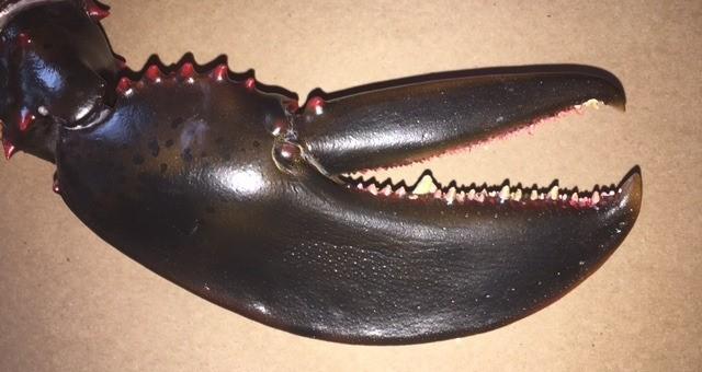 lobster claw 2.jpg