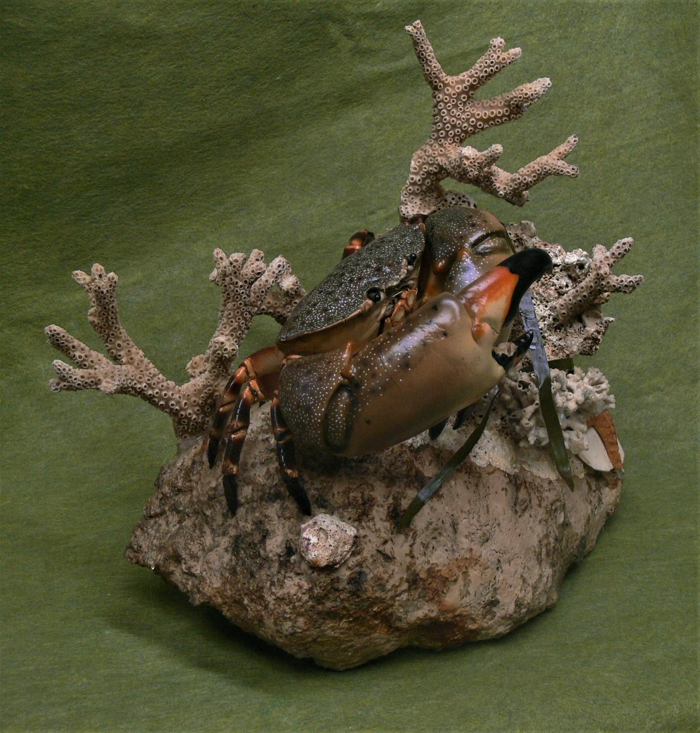 Crab diorama 1.JPG