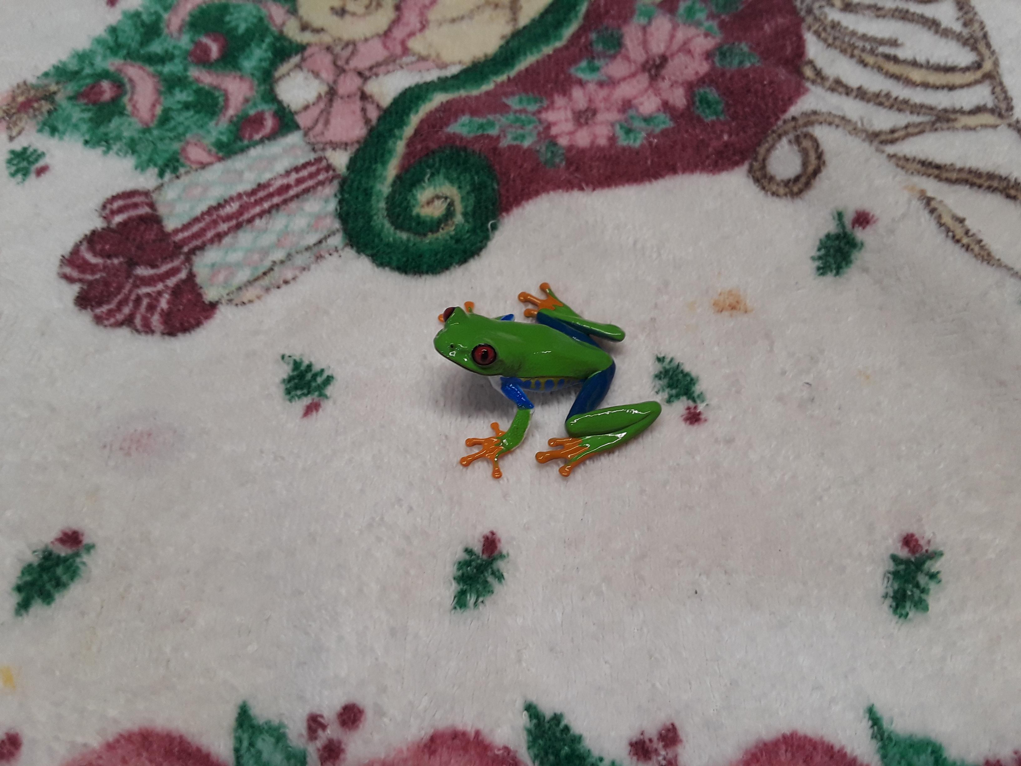 red eyed tree frog 7.jpg
