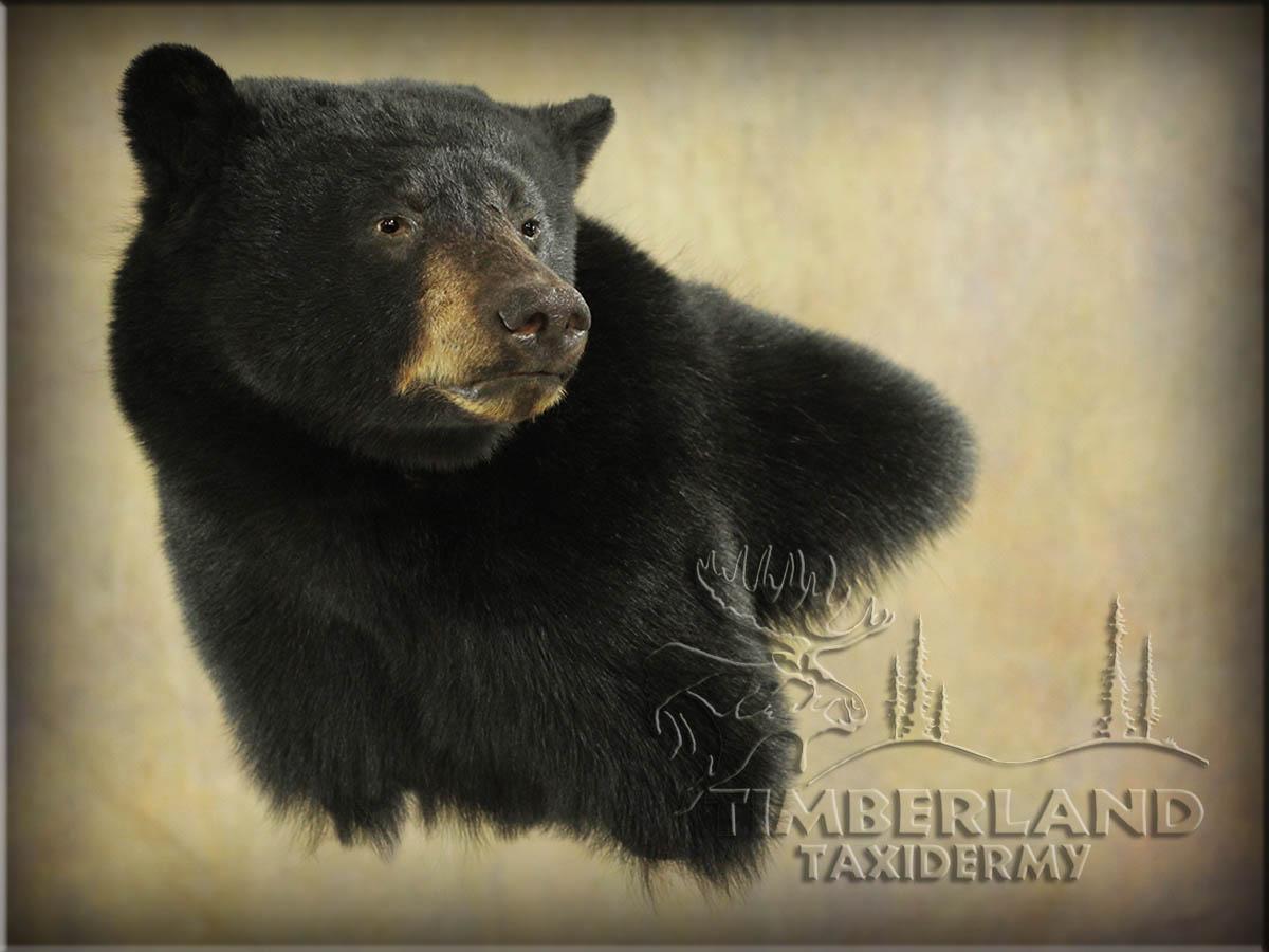 bear_trav2.jpg