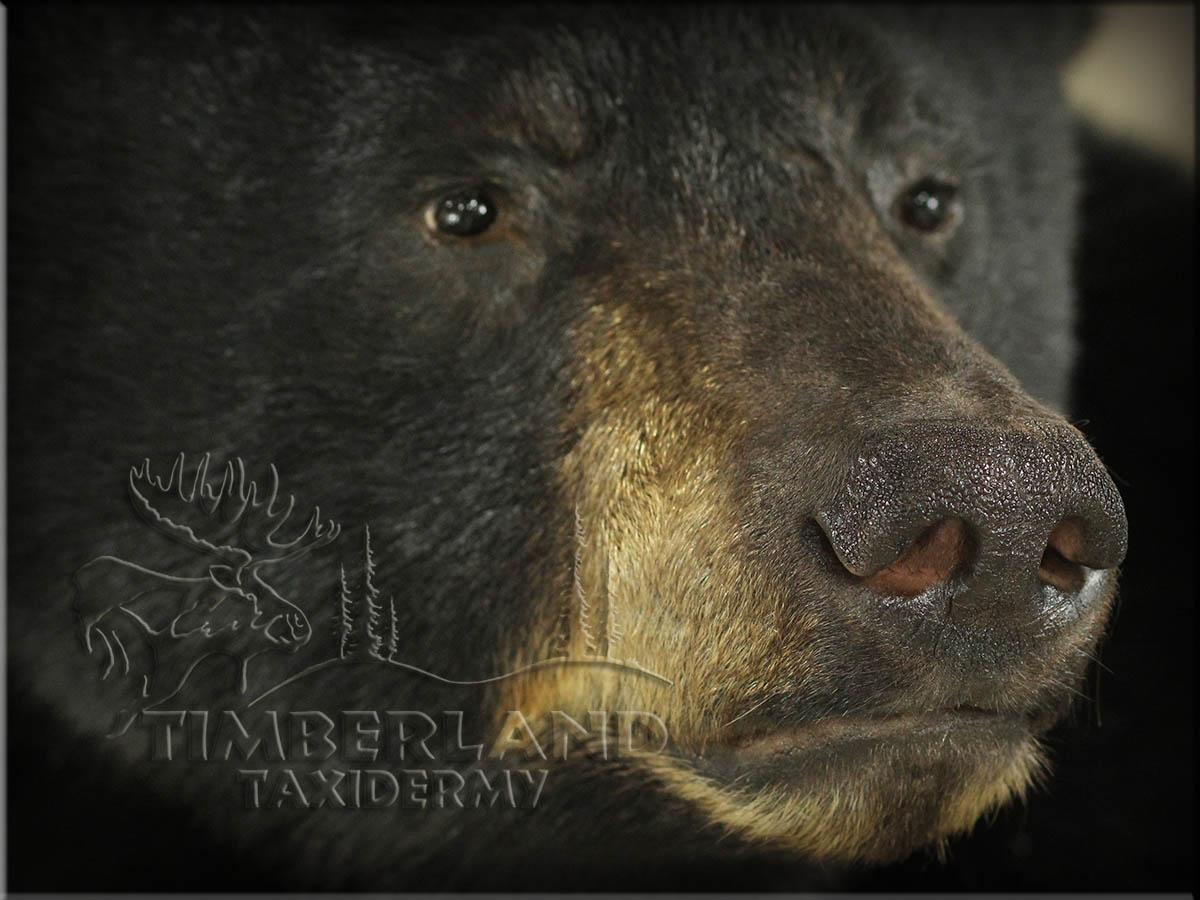 bear_trav1.jpg
