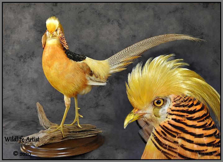 yellowgolden64.jpg