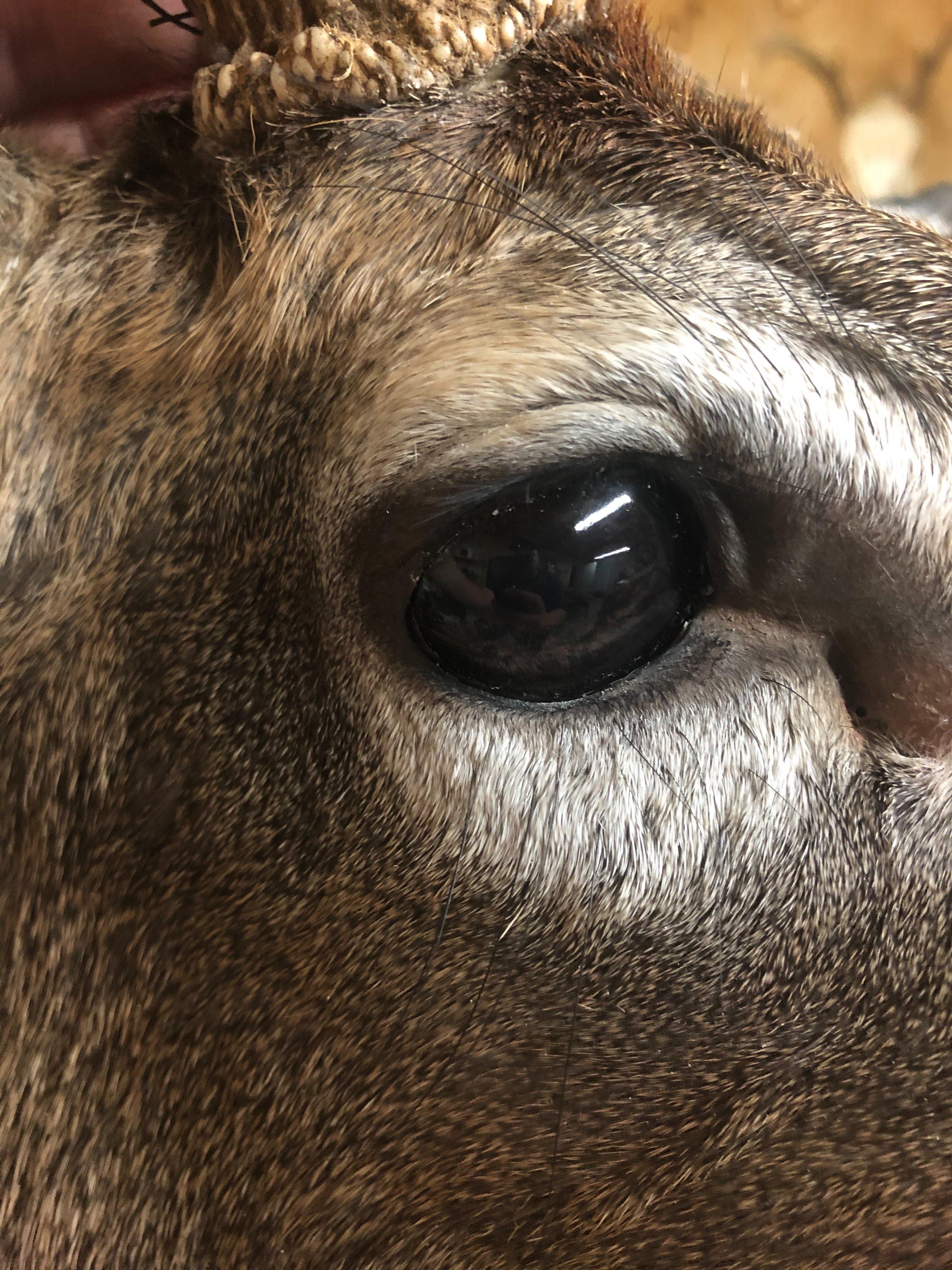 bubbas deer 1.jpg