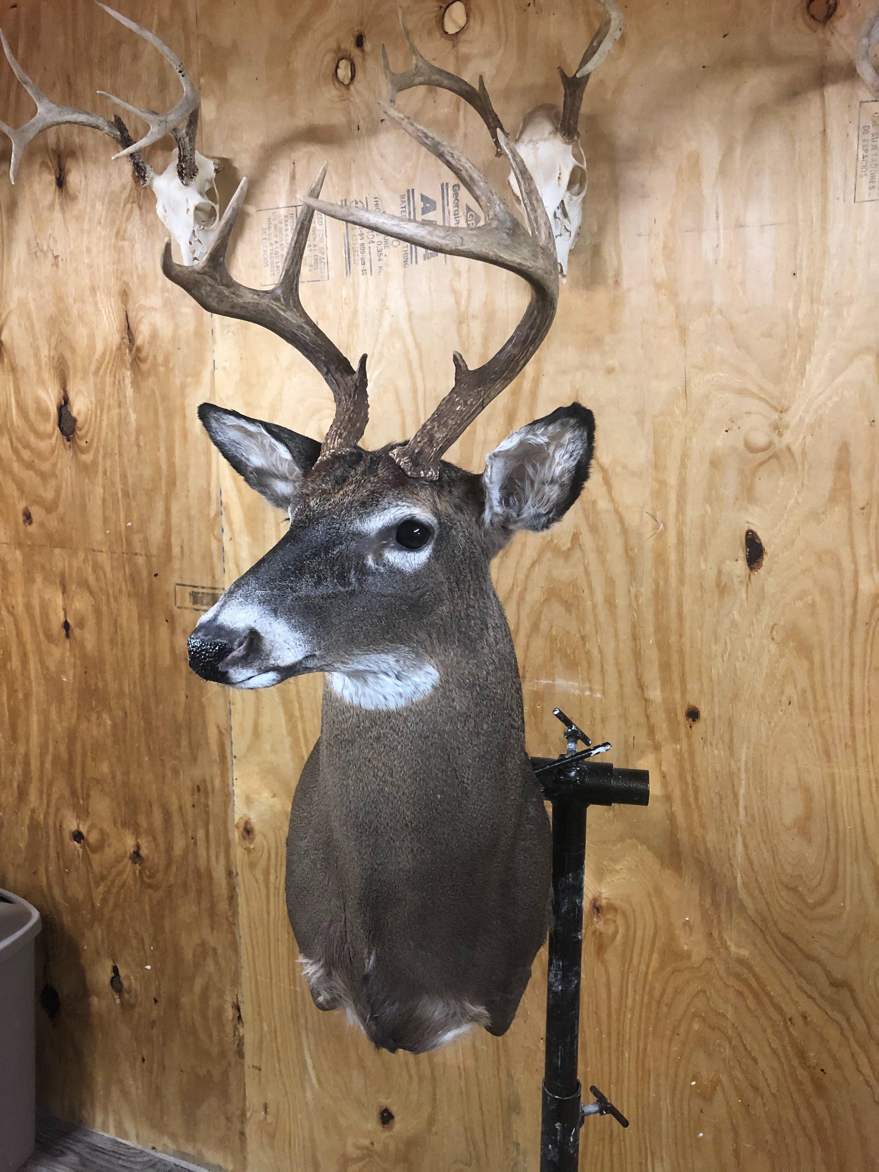 bubbas deer 2.jpg