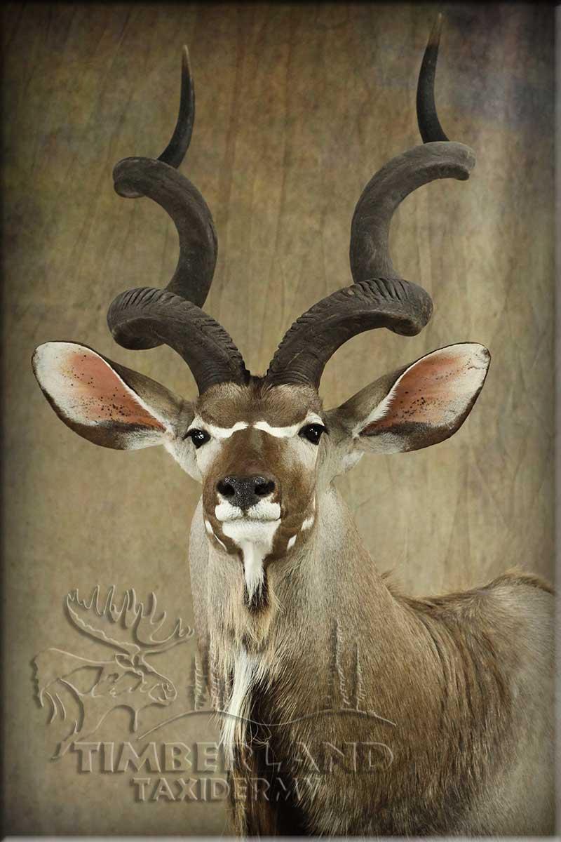 kudu_barton2.jpg