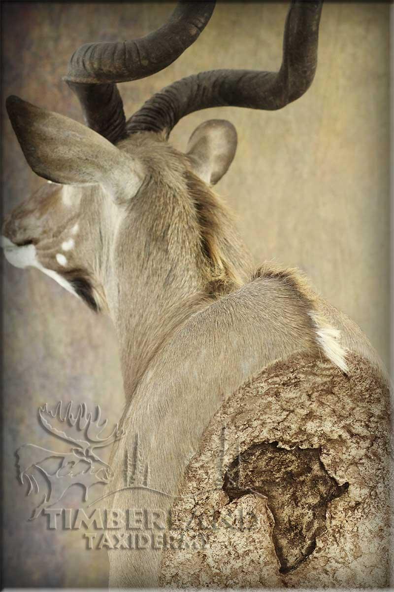 kudu_barton3.jpg