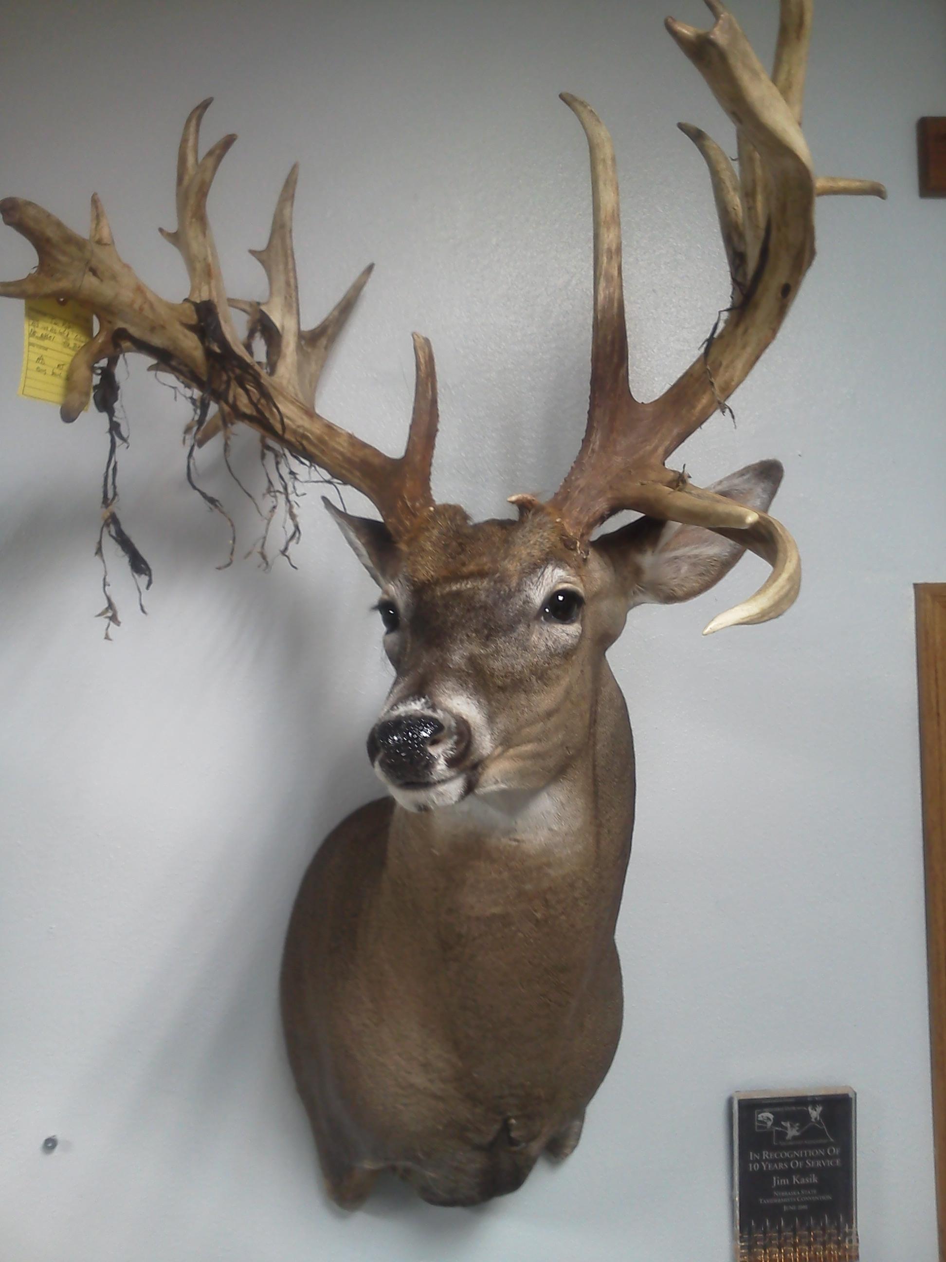 Deer Pix.jpg