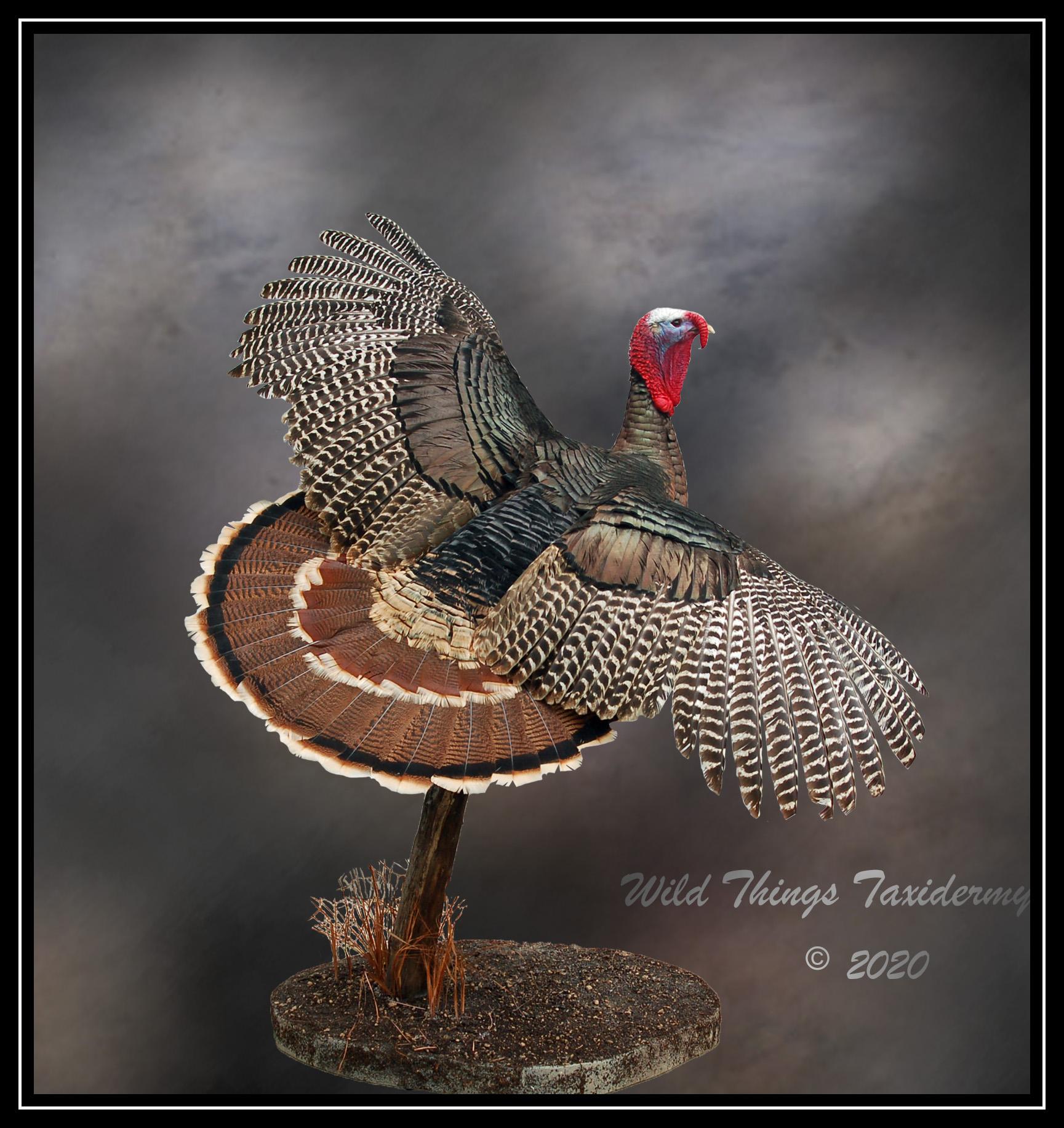 2020 Garrison Turkey Final.jpg